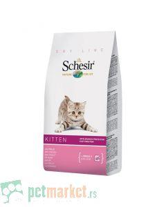 Schesir: Kitten